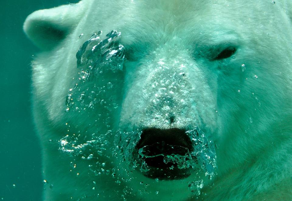 Kingman Events – The Polar Bear Plunge