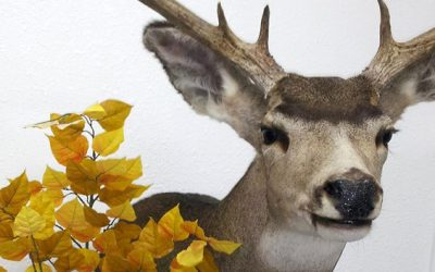 Down and Mount Taxidermy